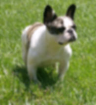 """Champaign-Urbana Illinois area housecall veterinarian"