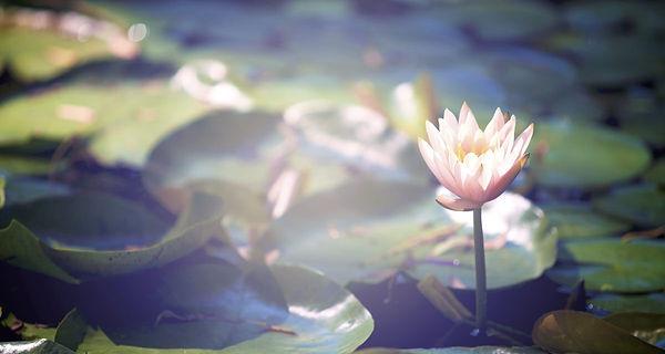 lotus photo.jpg