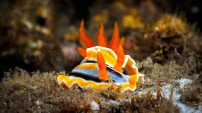 nudibranch (188773)