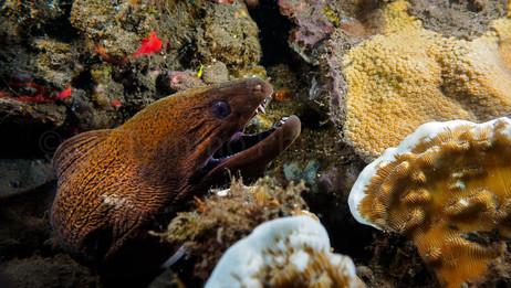 moray eel (158590)