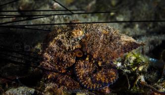 kraken (177794)
