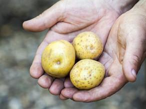Het aardappelmannetje