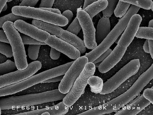 El desequilibrio en la microbiota intestinal contribuye a la metástasis del cáncer de mama