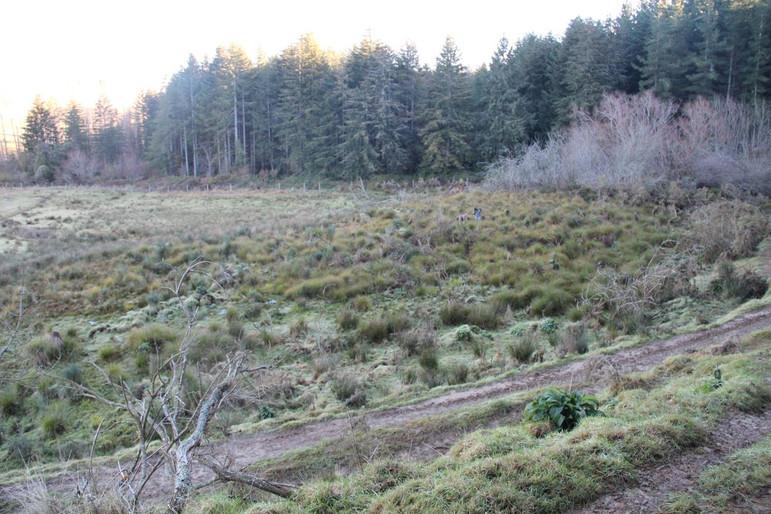 Wetlands 5.jpg