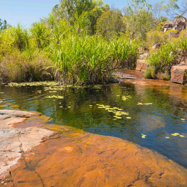 Ruby Falls (Red Cone Creek) (7).jpg