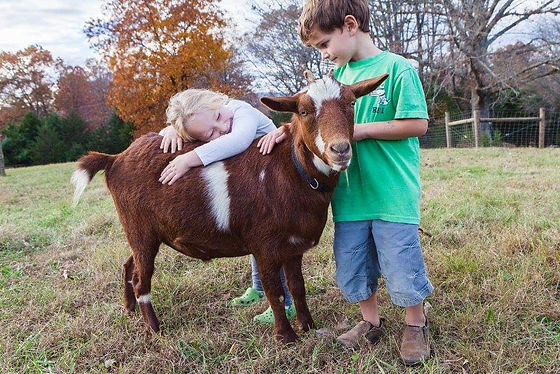 Children and a goat on farm