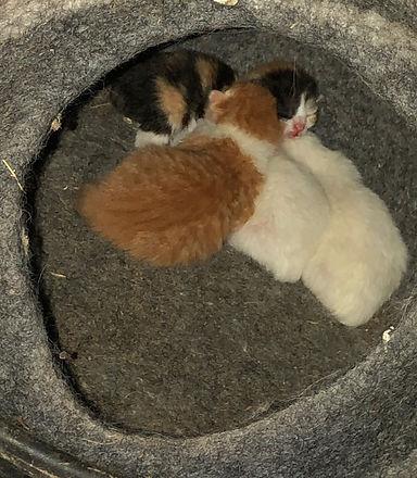 Cats%20-%206%20of%2044_edited.jpg