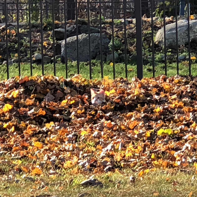 Leben in the Leaves