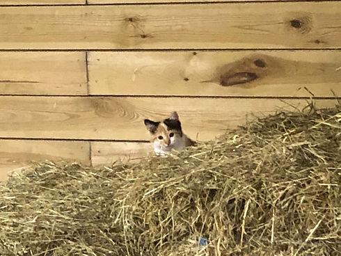 Cats - 3 of 44.jpeg