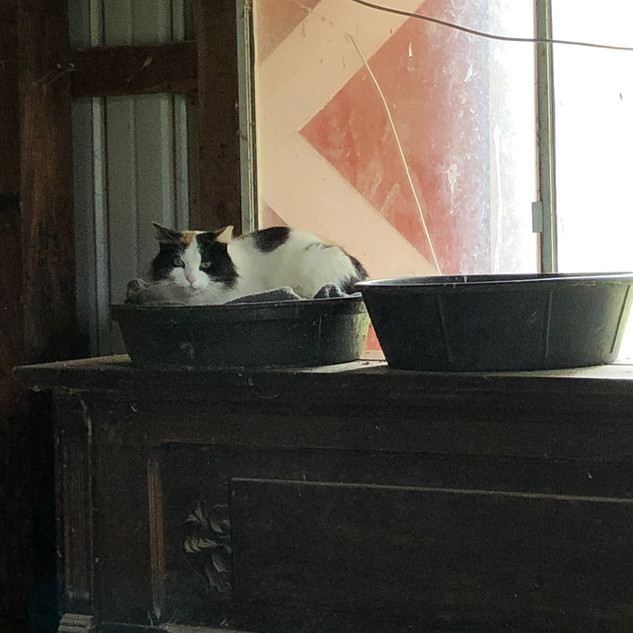 Zoya Just Hanging in the Barn