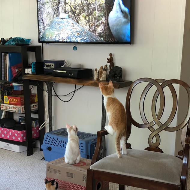 Bird TV - Yes, Please!
