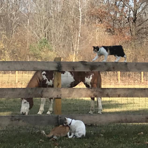Kittens Meet Cadence