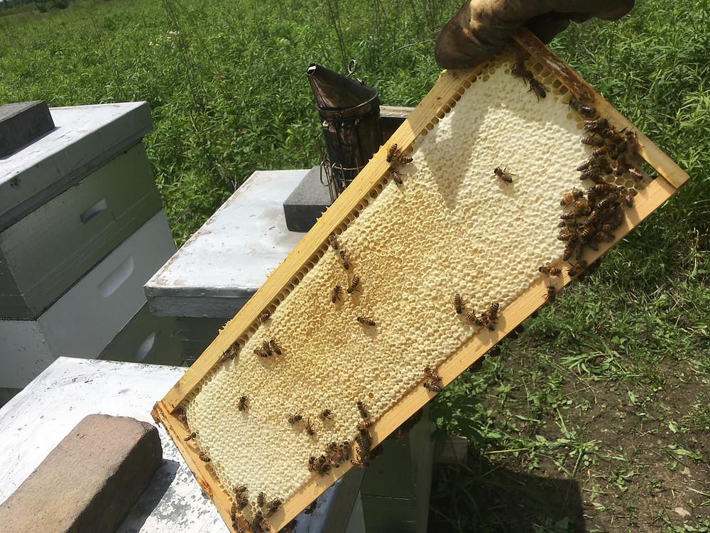 Capped honey. Frame. Honey. Dunham Bees. Farm. London, Ohio.