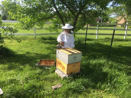 Backyard Bees, Outyard Bees