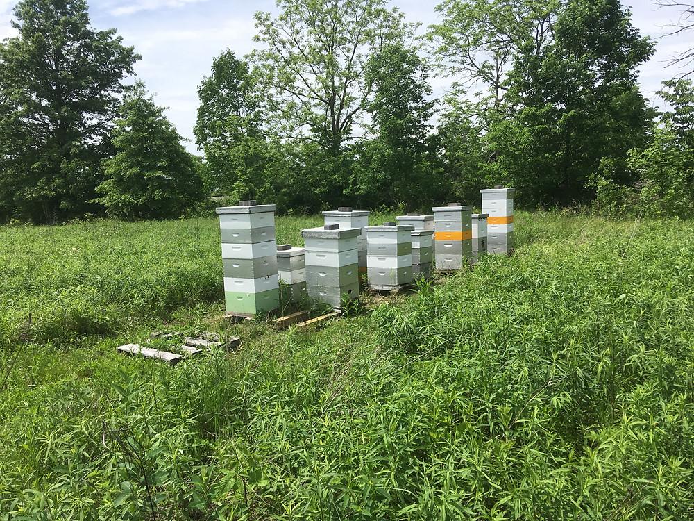 Apiary. Bee hives. Honey supers. Dunham Bees. Farm. London, Ohio.