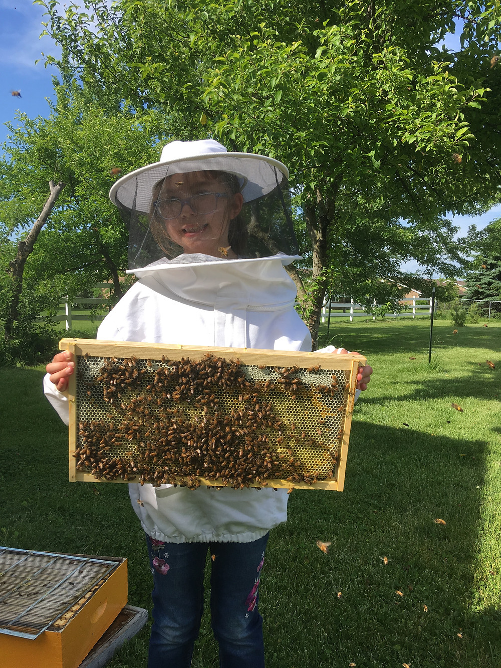 Honey bees. Beekeeper. Brood. Dunham Bees. Backyard. London, Ohio.