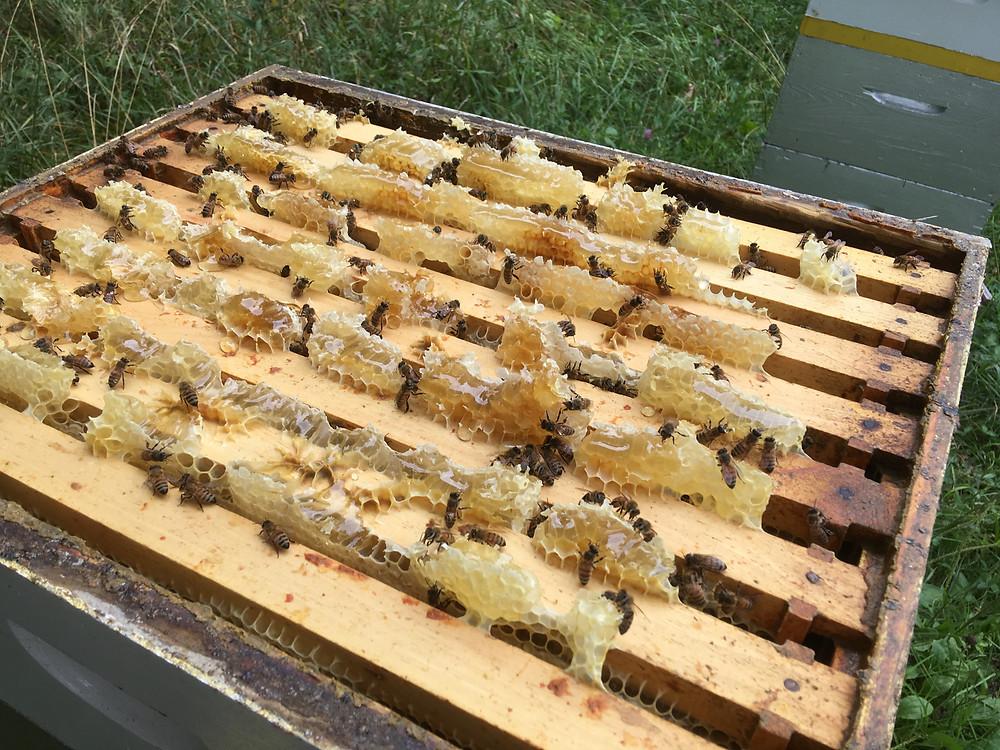 Bee hive. Honey super. Dunham Bees. London, Ohio. Honey farm.