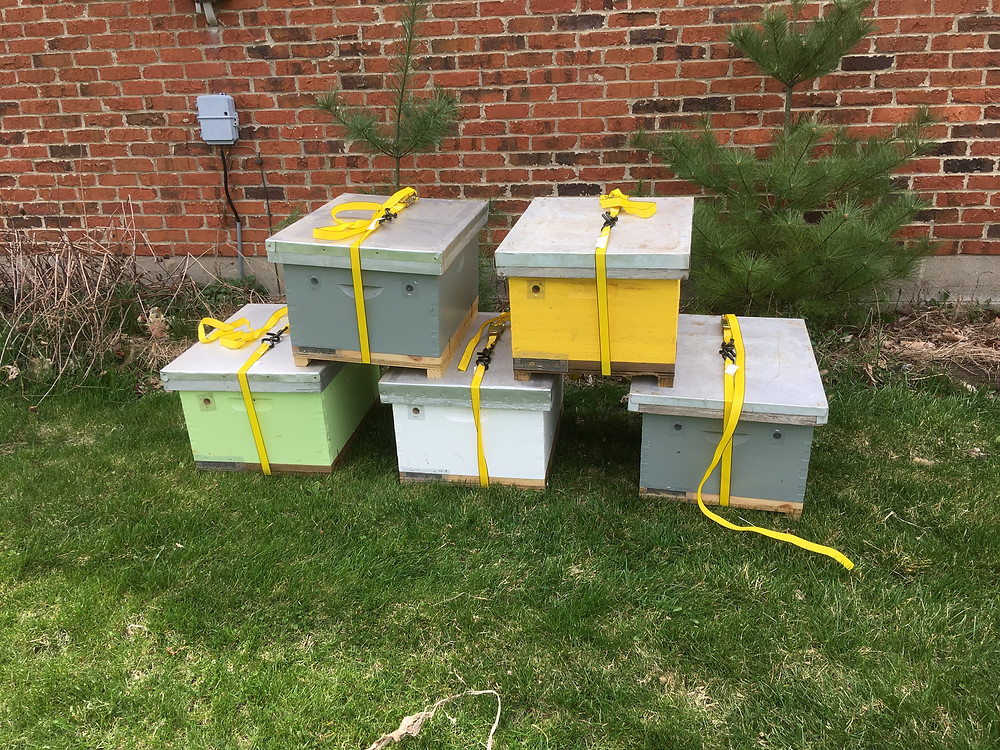 Nucs. Beehives. Double nucleus colonies. Dunham Bees.