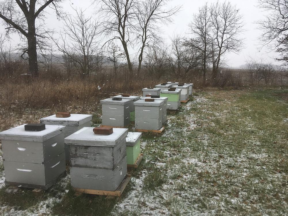 Dunham Bees. Apiary. London, Ohio. Honey farm. Winter. Snow.