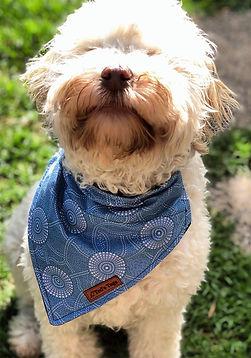 dog bandana, dog collar, dog accessories, luxury, melbourne, dog, pet