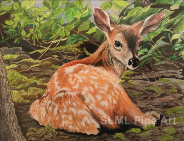 Fawn in the Forest