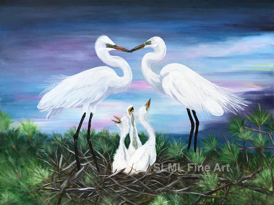 Snowy Egrets_Next Generation