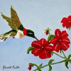 Hummingbird Sugar