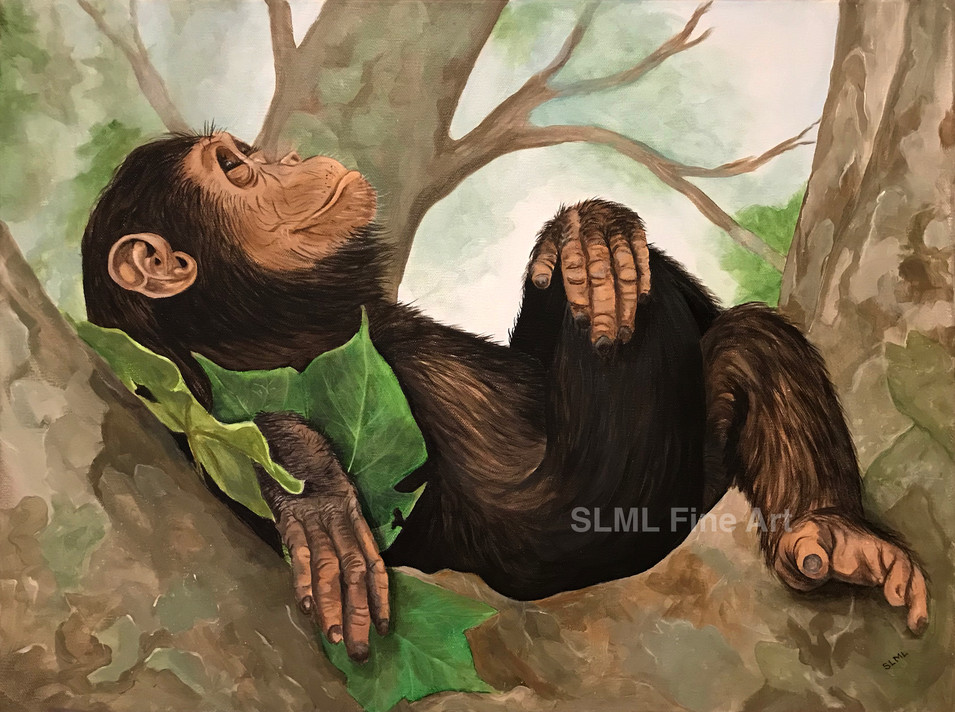 Reclining Chimp