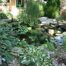 Small Pond with Small Water Fall.JPG