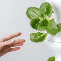 lettuce-grow-Rfe8w1FRM4U-unsplash.jpg