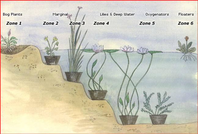 PlantingZones.jpg