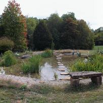 Natural Wetland Filtration