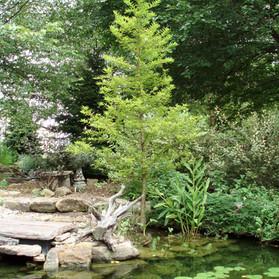 Big pond 9-4-06 017.jpg