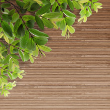 old-grunge-wood-texture-with-leaves_MyaK