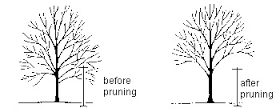 Structure Pruning