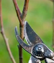 Shape Up! Early Spring Pruning