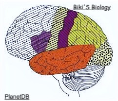 The Story Of Brain [Part-2]