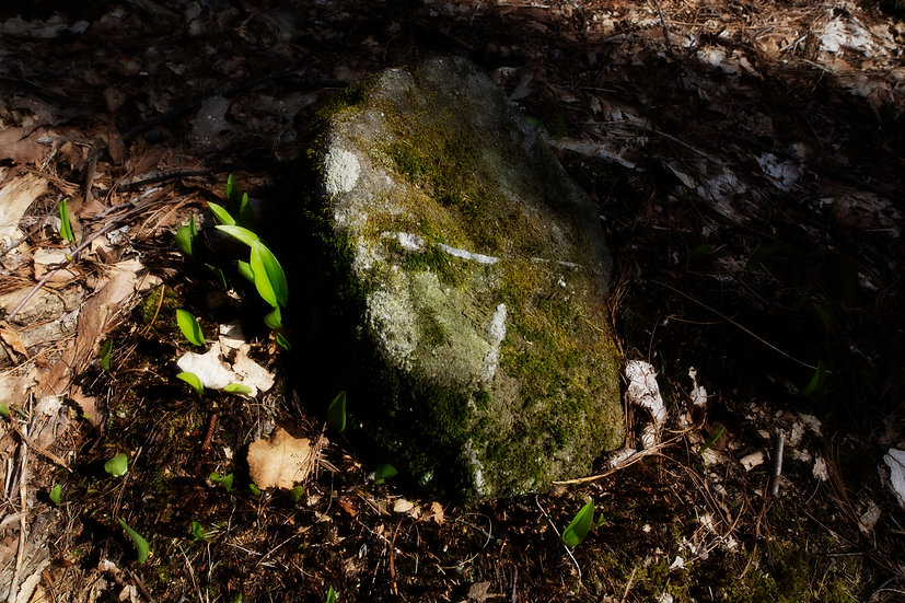 leaves rock moss | one