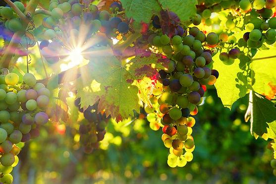 WIJN_druiven.jpg