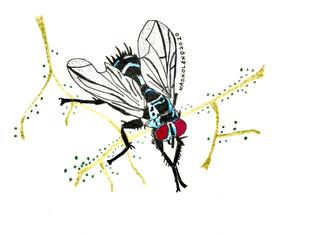 ハエの写真