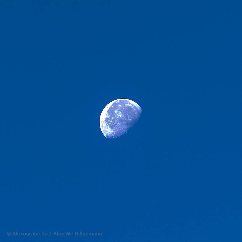 Luna am frühen Morgen