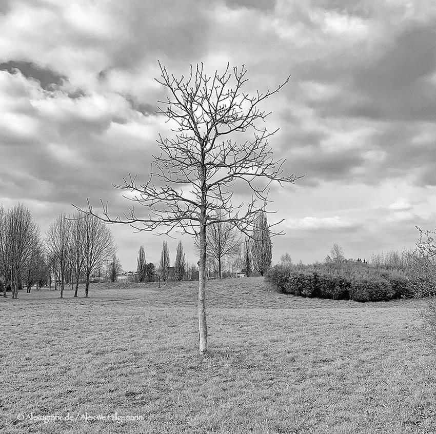 Park Schellerod