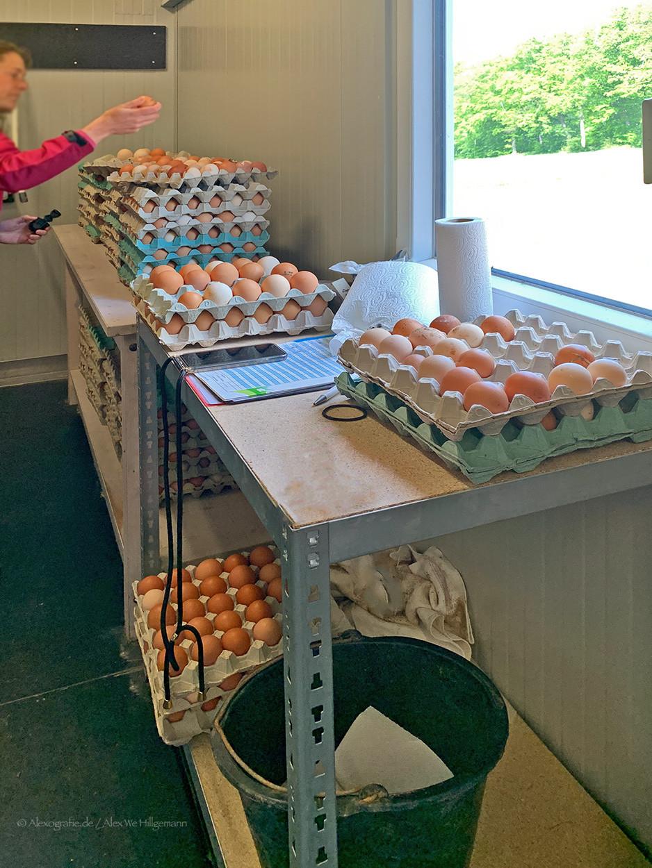 Stempeln der Bio-Eier auf Gut Fussberg