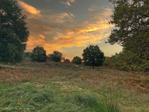 Herbst in der Wahner Heide - II.