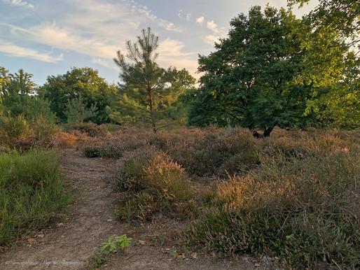 Spätsommer in der Wahner Heide