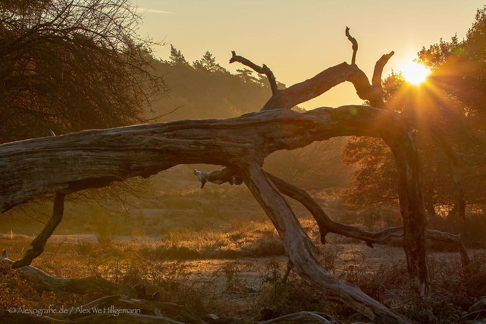Wahner Heide bei Sonnenaufgang