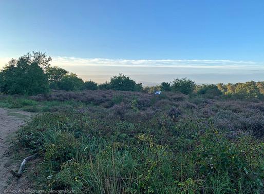 Marla Peppels erkundet die Wahner Heide