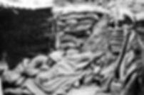 Vign_origine-des-poux_ws1004325490.jpg