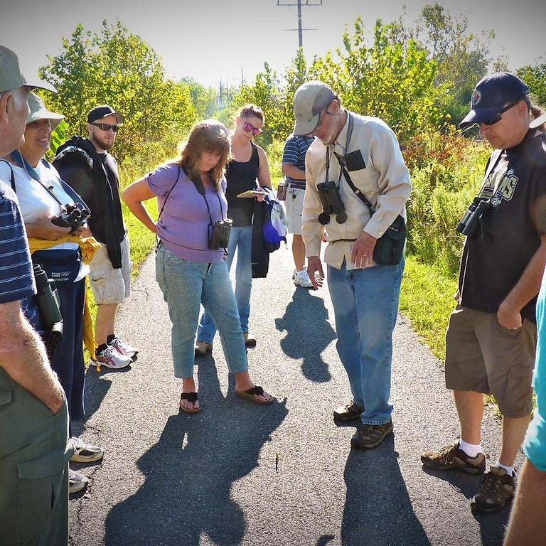Abrams Creek Wetlands Preserve Bird and Nature Walks