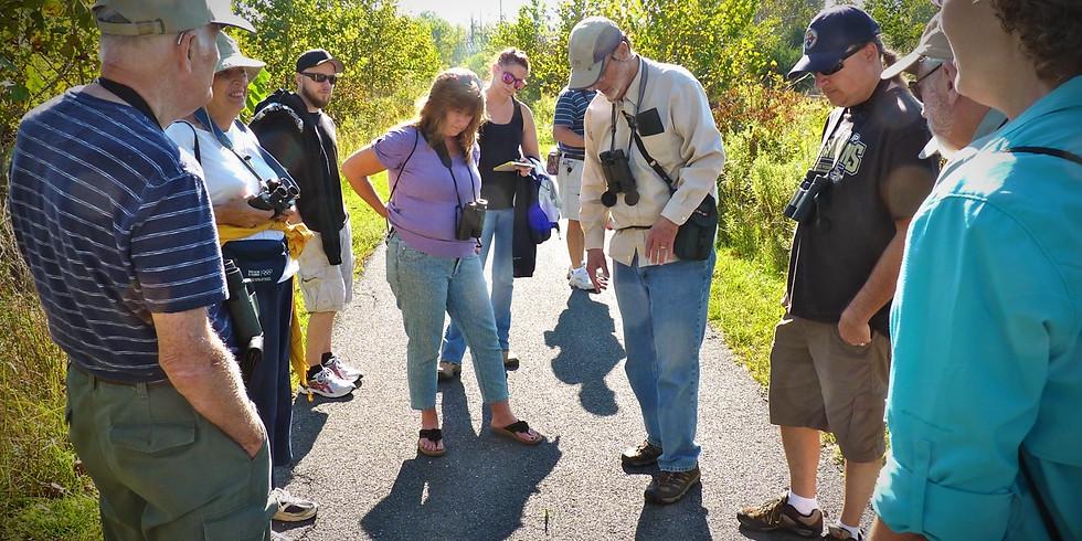 Abrams Creek Wetlands Preserve Bird and Nature Walks (2)
